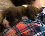 Abandoned Puppies Left to Die Near Rifle